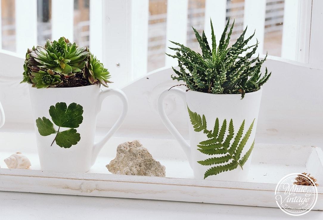 Blumentopf für Sukkulenten aus Tassen selber machen