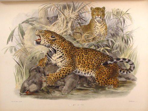 Baśnie o skunksie, baśnie o sprycie, jaguar baśnie ameryki, Baśnie na warsztacie, Mateusz Świstak, baśnie o Śmierci, współczesne baśnie,