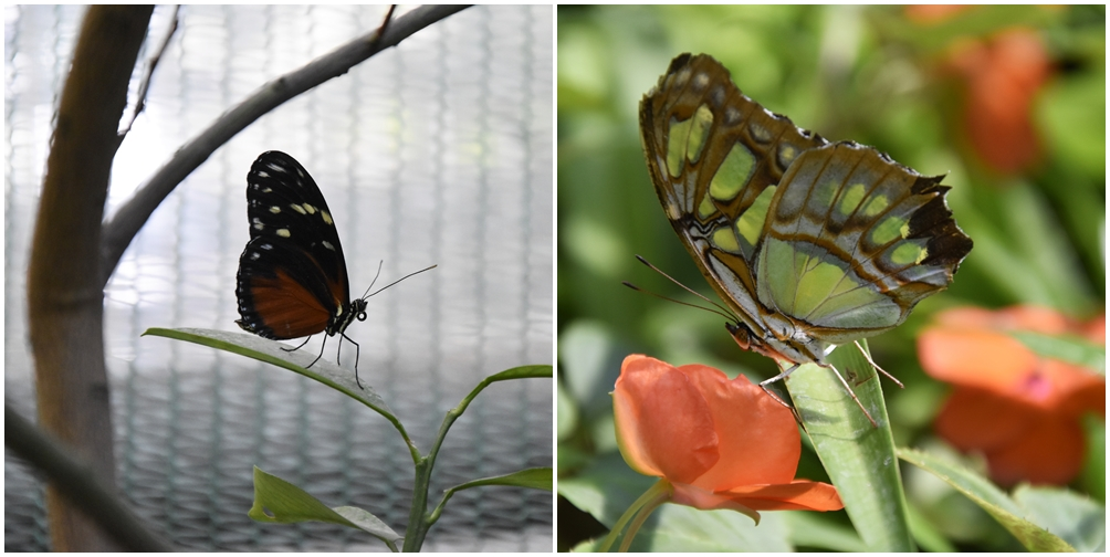 zoo w budapeszcie motylarnia
