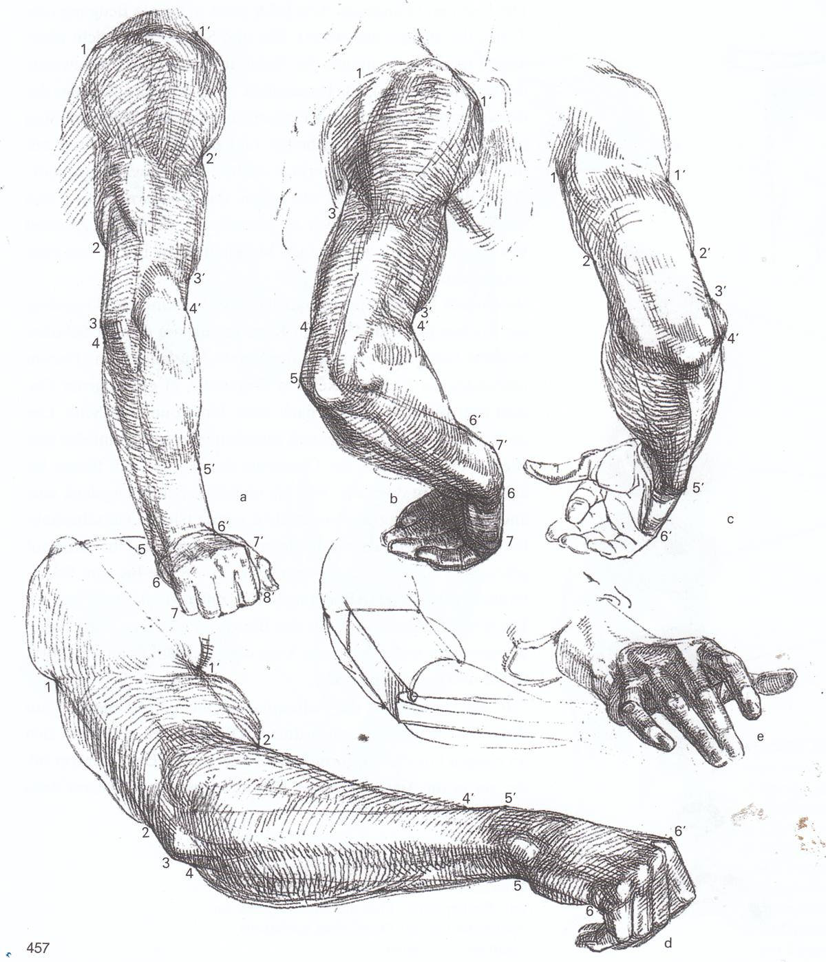 Ziemlich Oberlid Anatomie Fotos - Anatomie Ideen - finotti.info