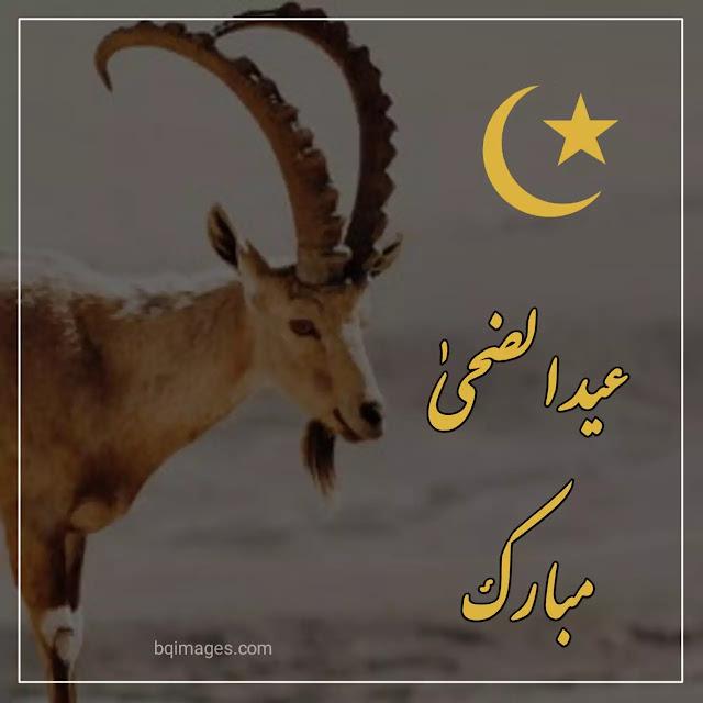 Eid Mubarak images eid ul Adha