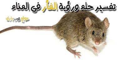 الفأر فى المنام وتفسير حلم الفأر فلا المنام بالتفصيل