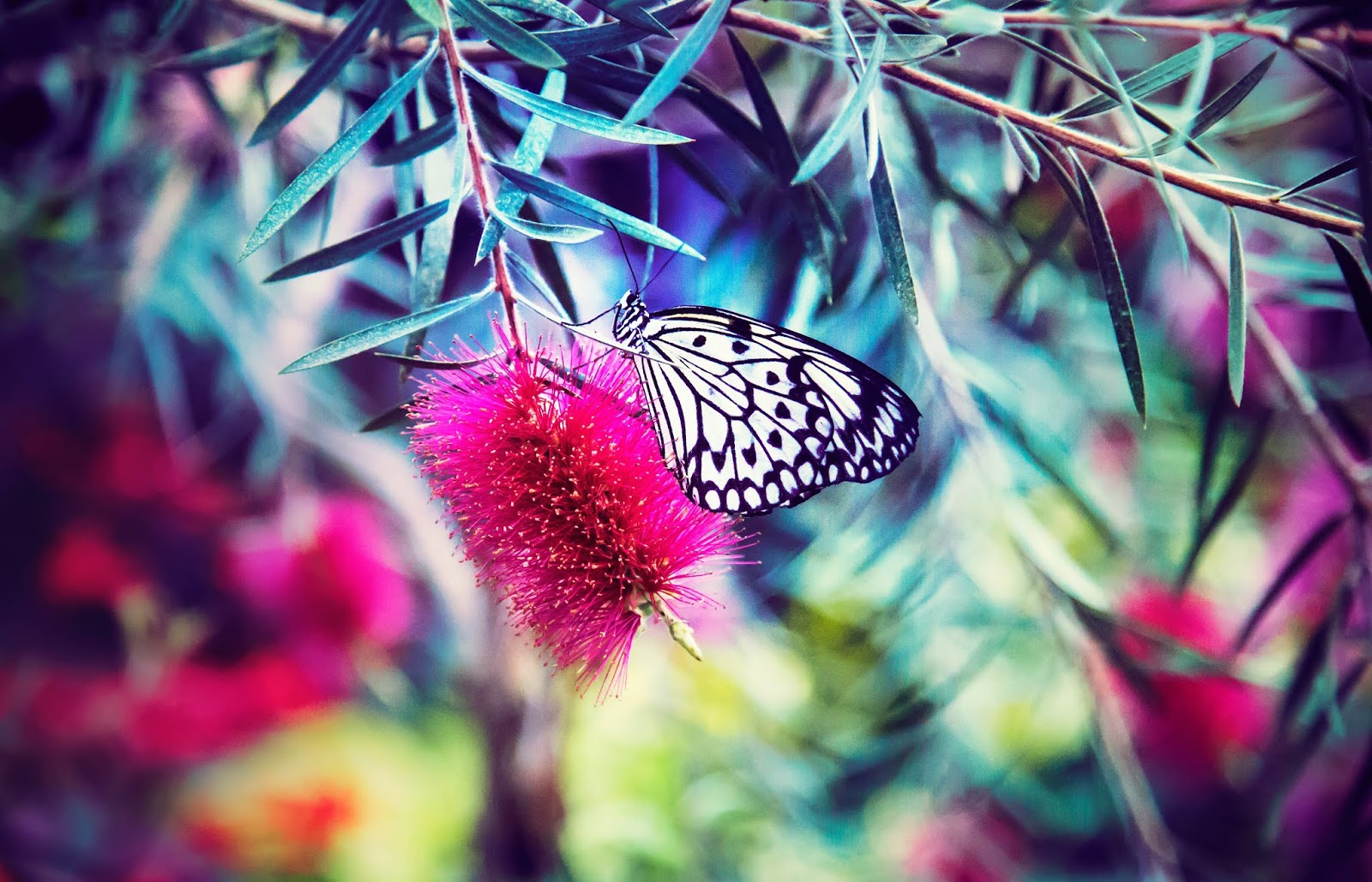 Colorful Bright Butterfly with Flowers Photography