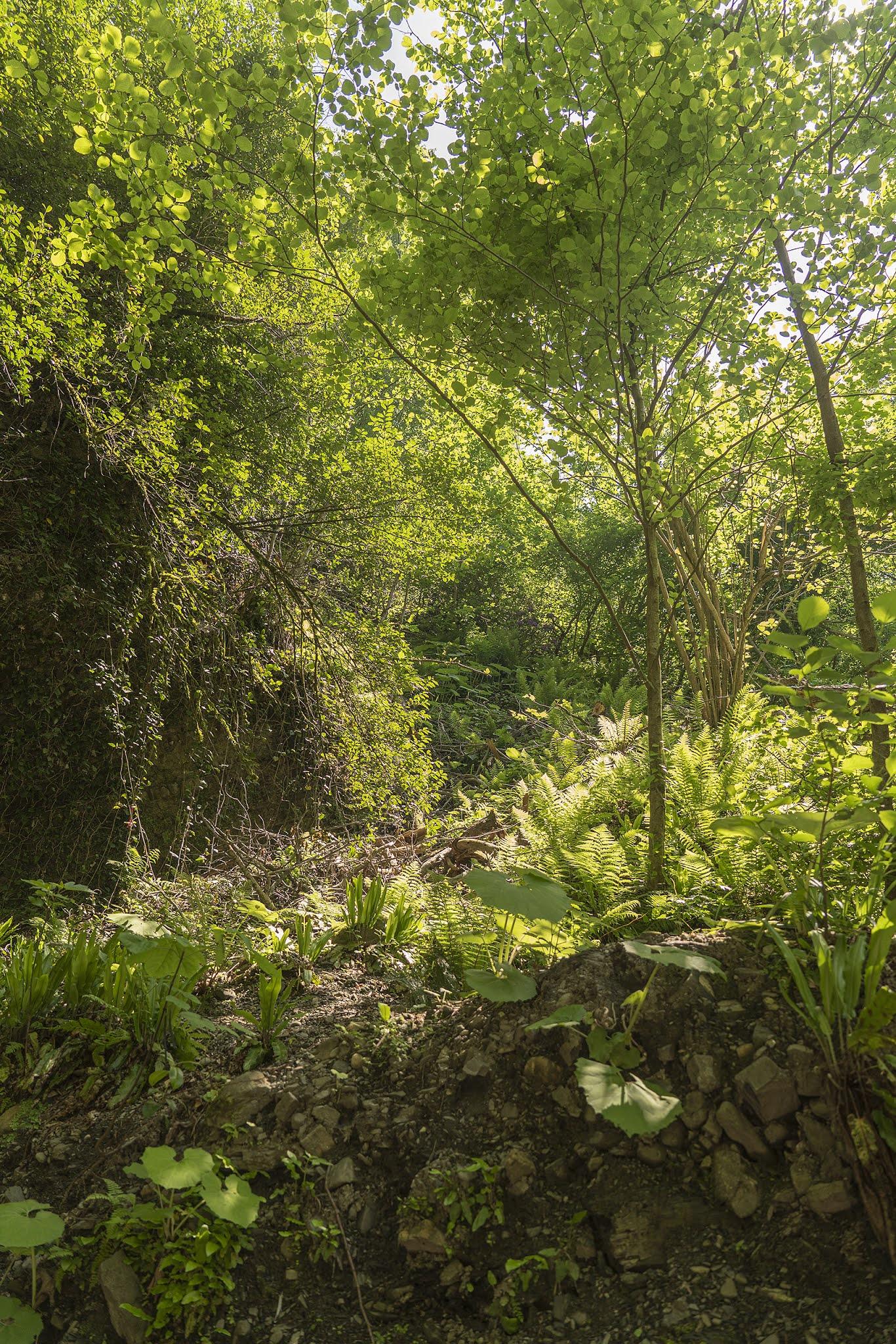 Dagomys forest summer nature foliage photo Igor Novik