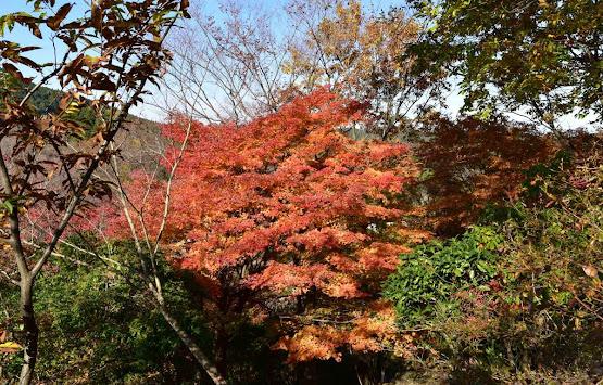 桜山公園の紅葉6
