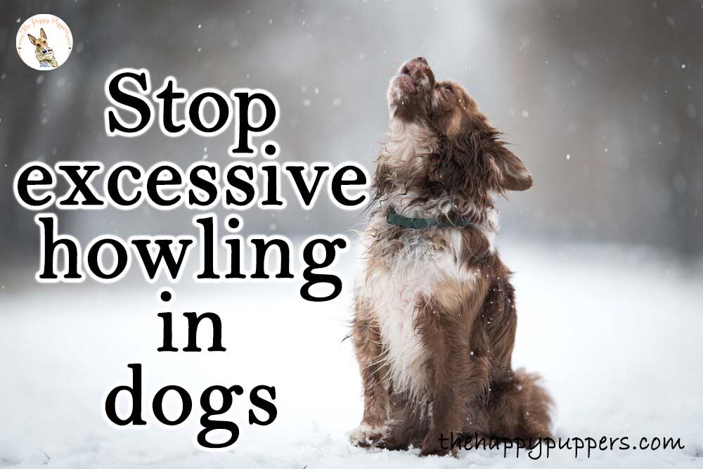How to stop excessive howling in dogs?