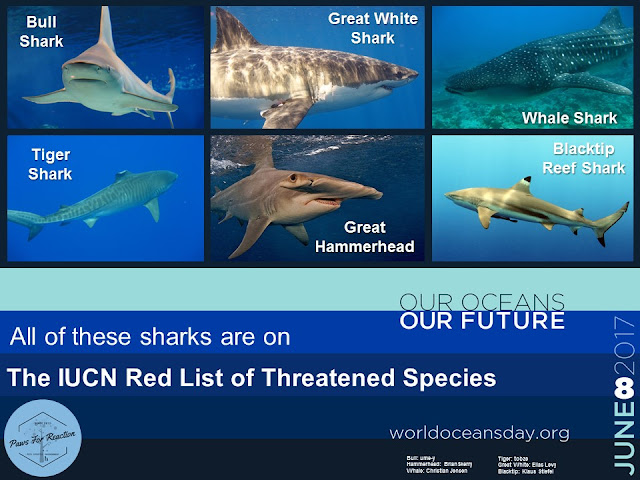 World Oceans Day June 8 endangered shark species