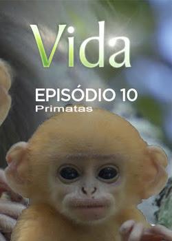 Baixar Torrent Vida – Episódio 10: Primatas Download Grátis