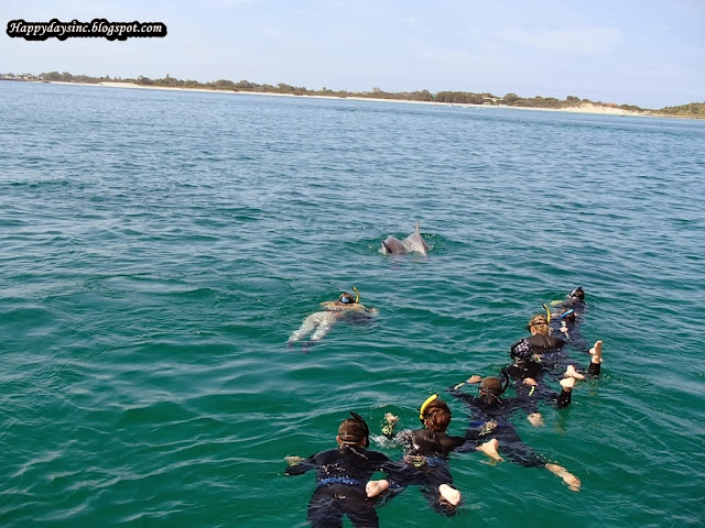 swim with the dolphins in sydney - photo#17