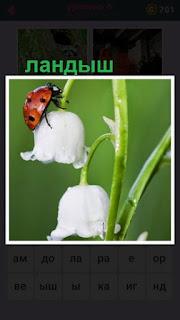 655 слов растут ландыши и по ним ползет насекомое 6 уровень