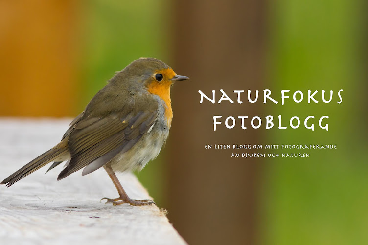 Naturfokus