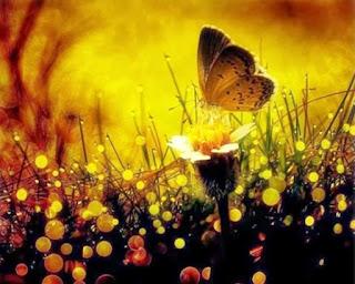 """Borboleta pousa em flor dentro de um jardim. title """"O amor, o maior de todos os dons"""