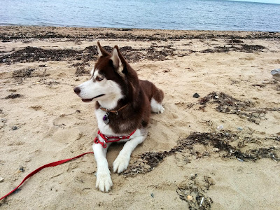 The water on the bay side of most beaches is usually calmer and may be safer for dogs