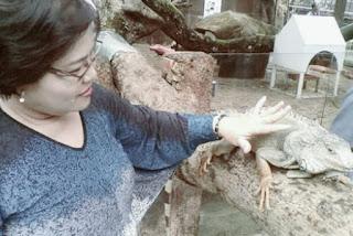 Jenis Iguana batu badak