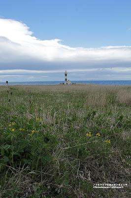 ノツカマップ灯台とセンダイハギ ≪Notsukamappu Lighthouse≫