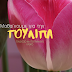 Τουλίπα, βολβός φθινοπωρινής φύτευσης