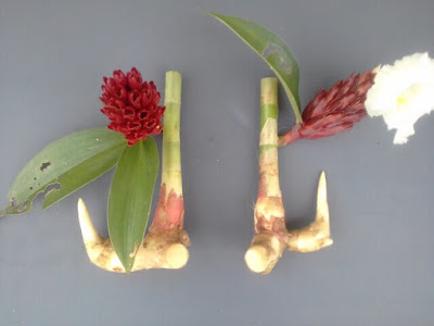 Tanaman Herbal untuk Obat Panas Dalam.jpg