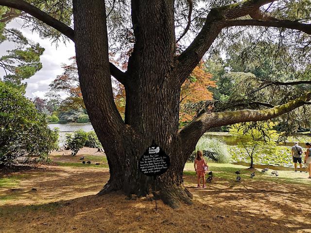 Living museum tree