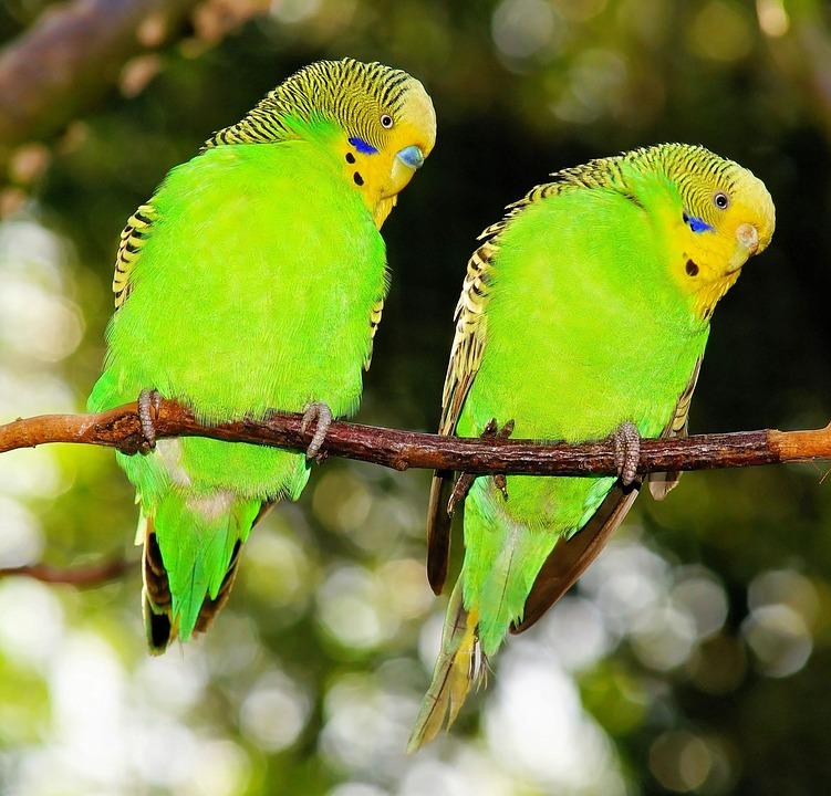 Mother Nature Certainly Has Proliferated Earth With A Wide Variety Of Green  Birds Ranging From The Common Pet Parakeets (or, As The Brits Call Them, ...