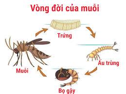 Phun muỗi tại huyện Mỹ Đức