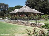 Shrub roses - Royal Botanic Gardens, Sydney, Australia