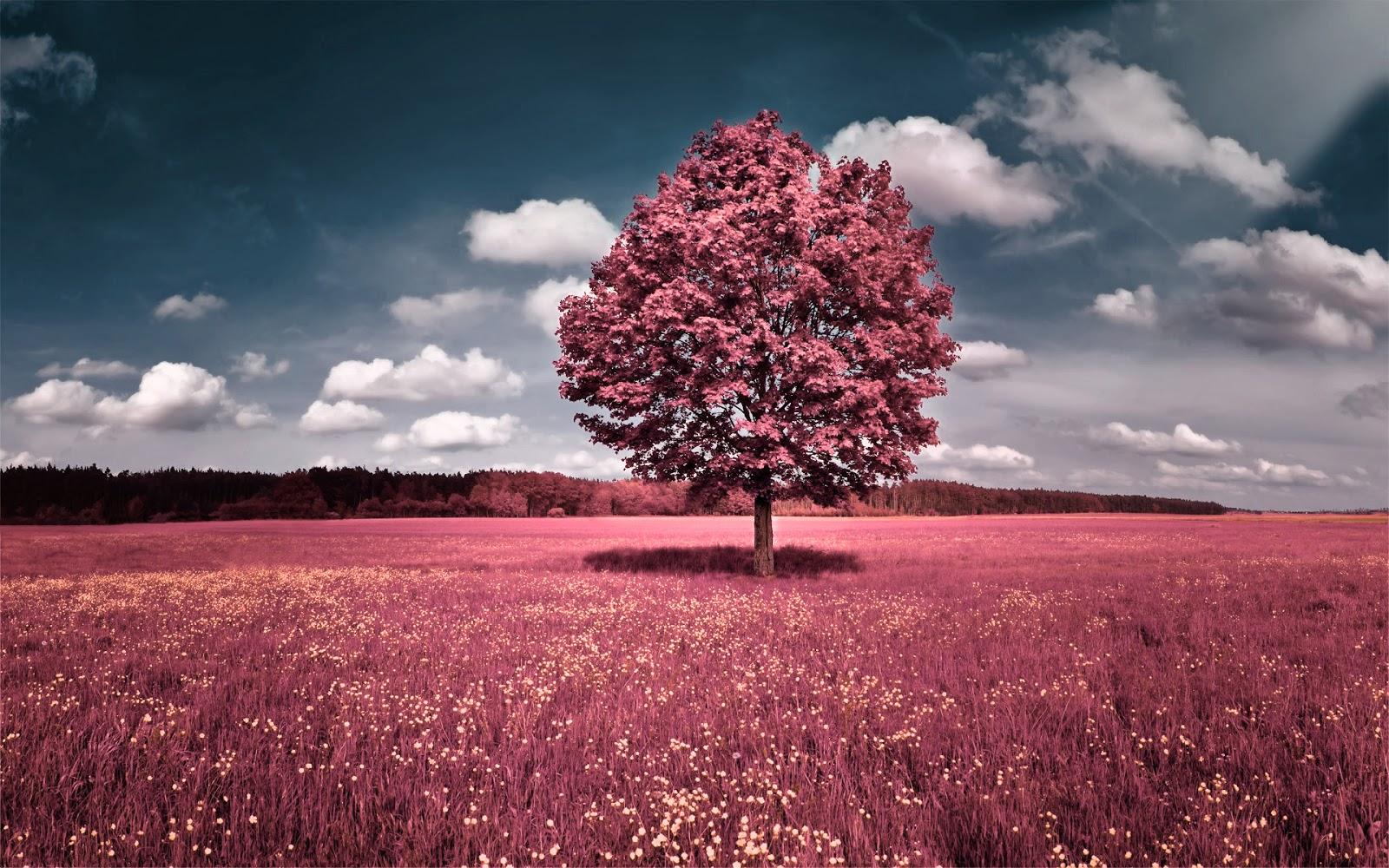 Pink Background HD:Computer Wallpaper | Free Wallpaper ...