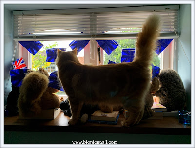 Hanging Out With Fudge & Furiends ©BionicBasil® The Pet Parade 352