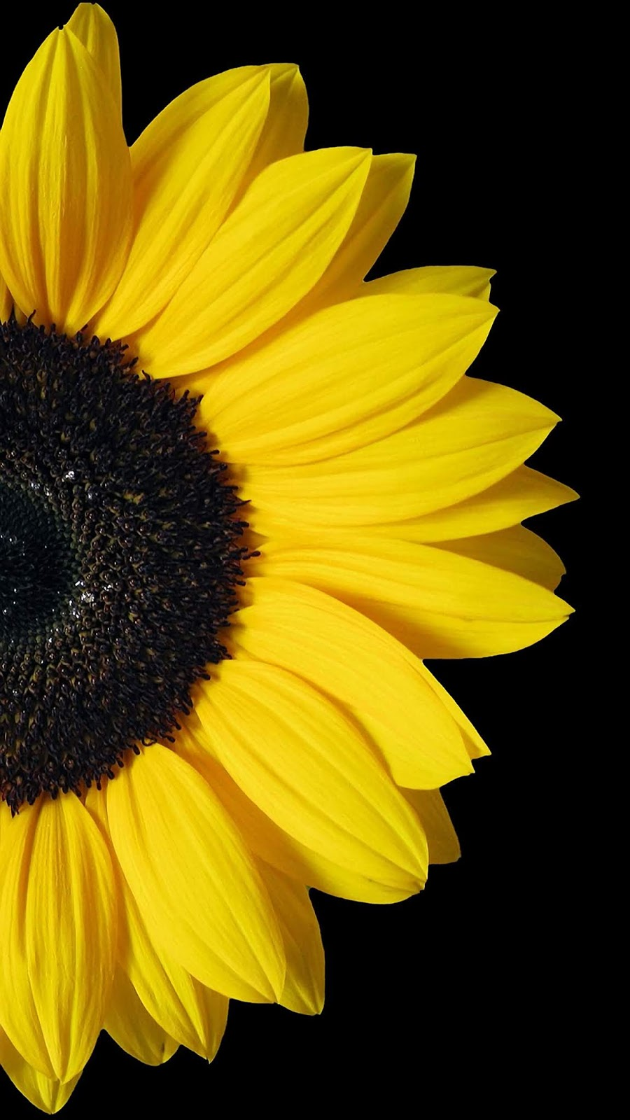 Hoa hướng dương cho màn Amoled