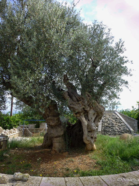 Argos Argolide Peloponnèse Grèce