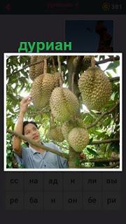 655 слов женщина собирает урожай дуриана 4 уровень