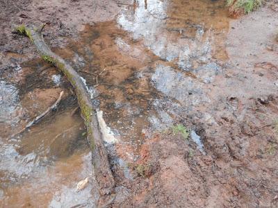 Muddy stream, Devon, January