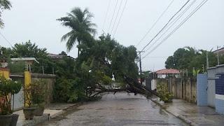 Com chuvas, árvore cai e danifica postes em João Pessoa
