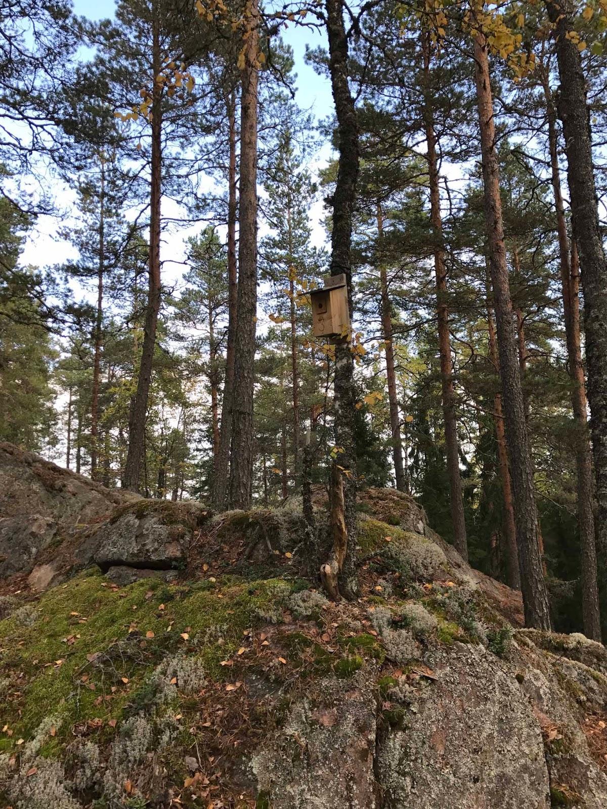 Suomalaista metsämaisemaa