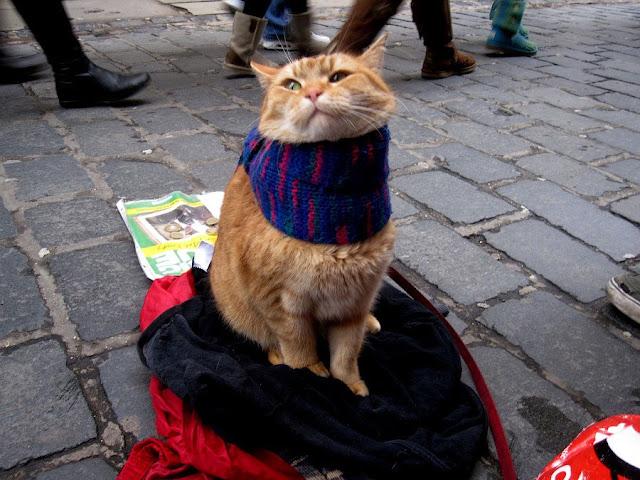 Husmeando por la red: Bob, el gato callejero que cambió la