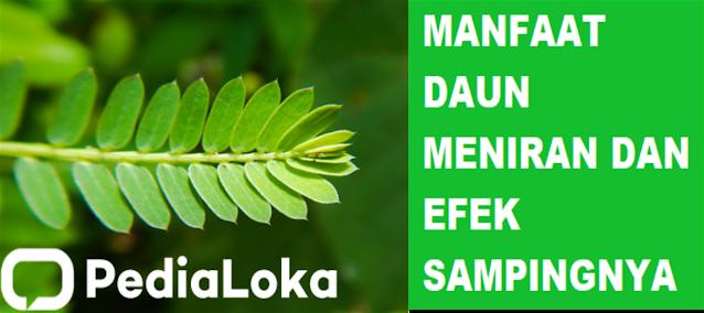 Manfaat daun meniran dan efek sampingnya