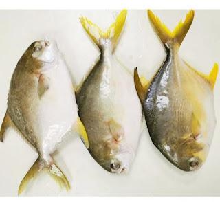 تفسير رؤية السمك الميت في الحلم