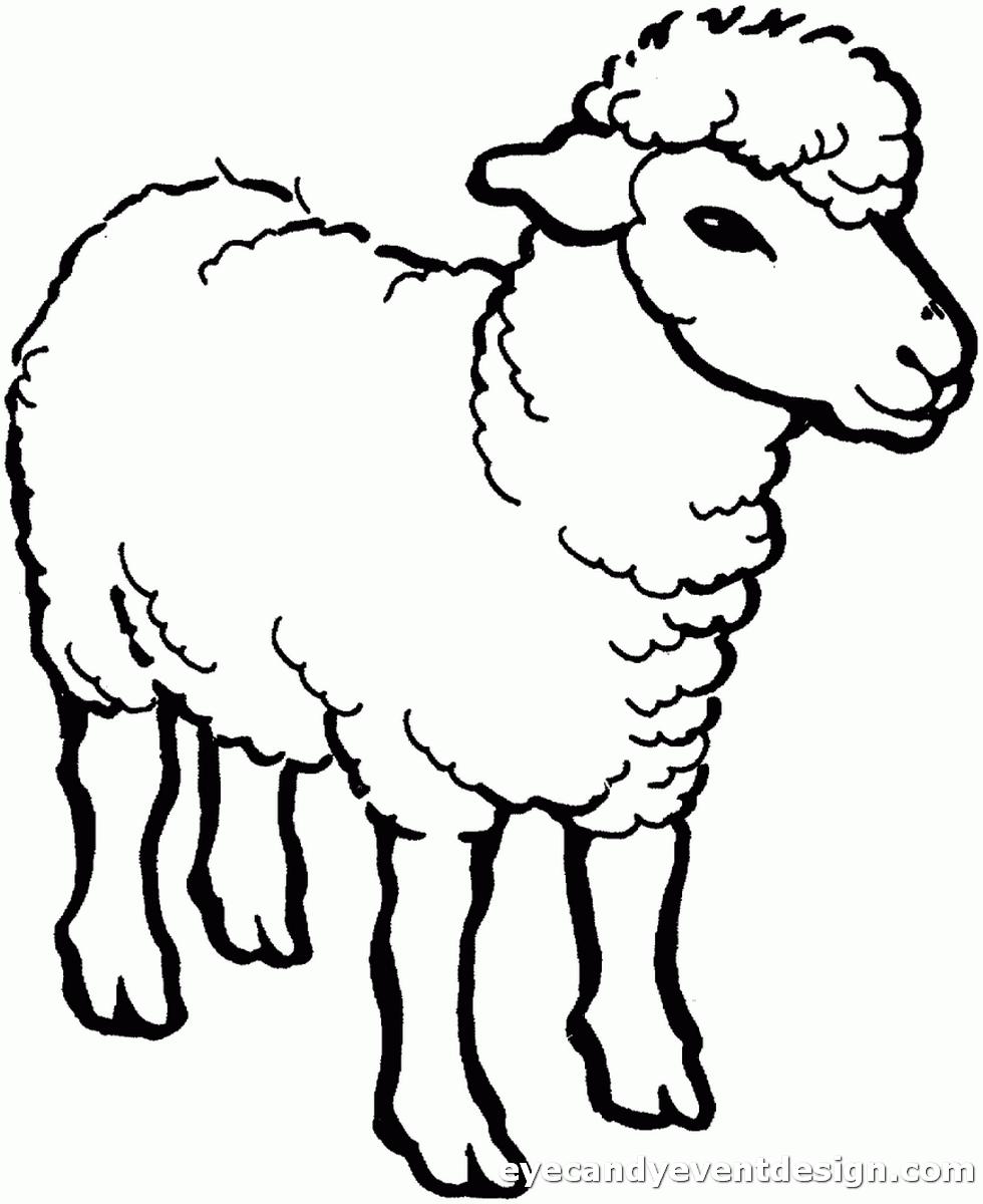 Schaf Bilder Zum Ausdrucken