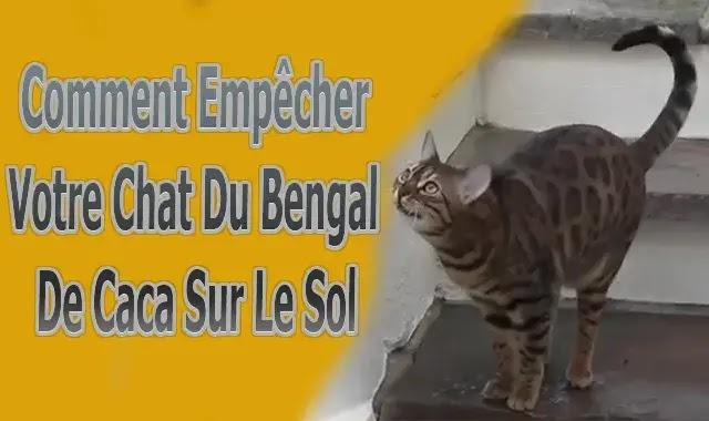 Empêcher Votre Chat Du Bengal De Caca Sur Le Sol