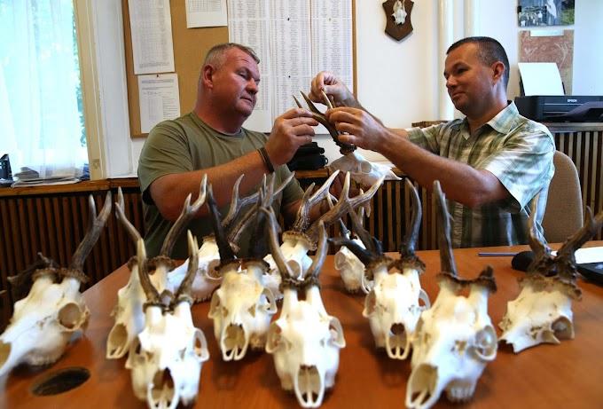 Eltűntek a vendégvadászok, kevesebb őzbakot lőnek ki