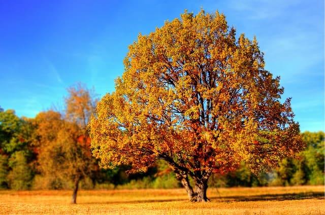 मी झाड झालो तर निबंध मराठी | if i become a tree essay in marathi | mi zad zalo tar