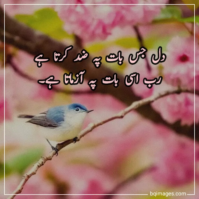 blessings of allah quotes