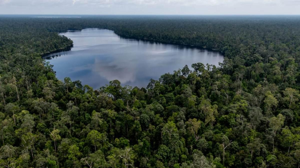 hutan rawa gambut di Sumatera