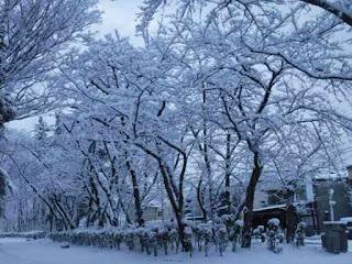 雪の花が咲いた木