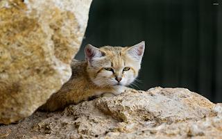 cat-clipart