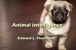 Animal intelligence