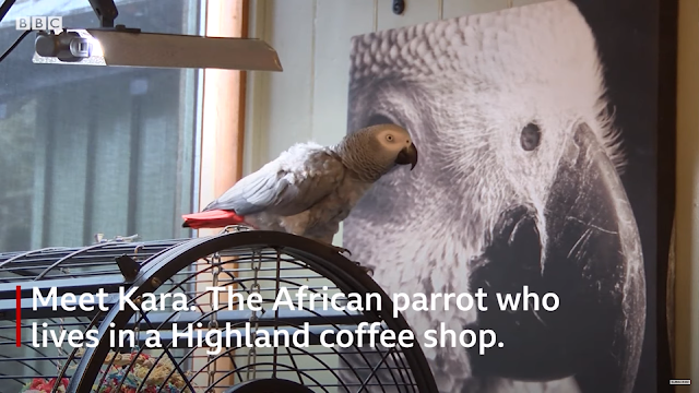 Meet Kara, the trek-loving parrot | BBC News | Breaking Video News Xit4U