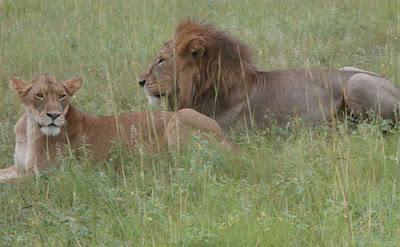 + 2 days queen elizabeth national park Wildlife Safari rwanda