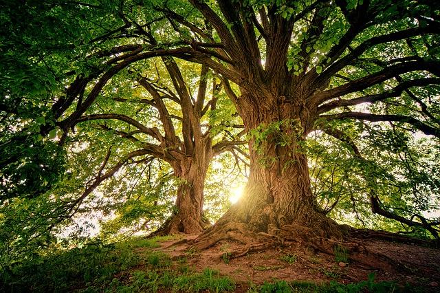 immagine di alberi