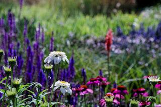 plantas vivaces, composiciones florales, diseño de jardines, paisajismo