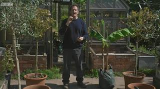Monty Don banana plant